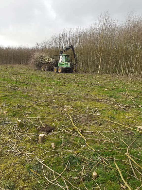 Forestry site clearance